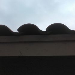 Tile Roof Problem - No Bird Stop Under Tiles - Small